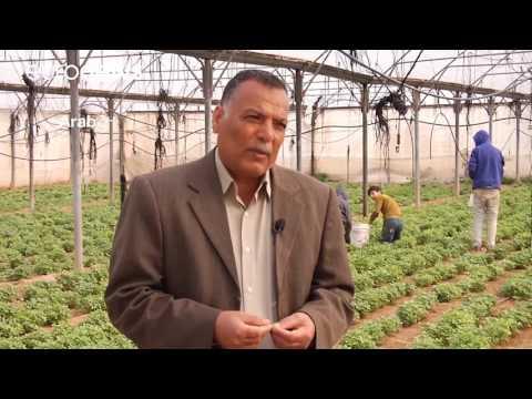 العرب اليوم - بالفيديو  تفاقم أزمة ورود و أزهار قطاع غزة المحاصر