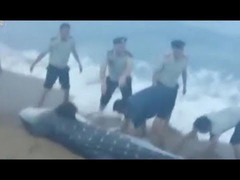 فلسطين اليوم - لحظة إنقاذ سمكة قرش وإعادتها إلى المياه