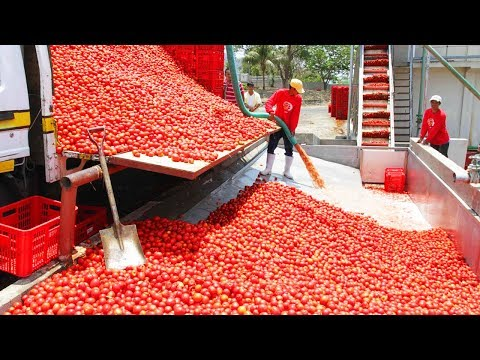 فلسطين اليوم - عمال بدرجة أبطال خارقين