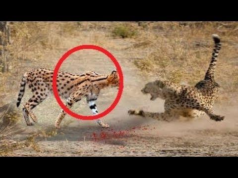 فلسطين اليوم - شاهد حيوانات أنقذت حياة صغارها بشكل لا يصدق