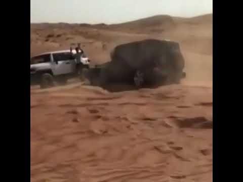 فلسطين اليوم - رجل يستعرض مهاراته في القيادة بطريقة مذهلة