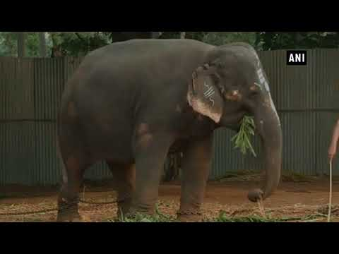 الفيل الفنان يعزف على آلة الهارمونيكا لجذب الزوار
