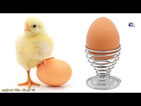 شاهد  حقائق طريفة ومذهلة عن البيض
