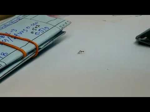 شاهد نملة تحاول سرقة ألماس أثناء وجودها في متجر مجوهرات