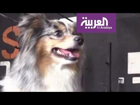 شاهد كلبة مذهلة تدهشك بحركاتها الرائعة