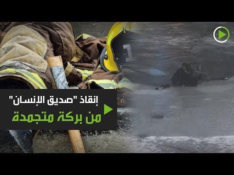 شاهد إطفائي يحطم الجليد لينقذ كلبًا سقط في بركة متجمدة