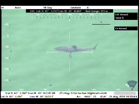 إخلاء شاطئ ماساتشوستس بعد رصد القرش الأبيض الكبير