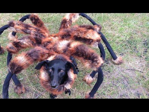 الكلب العنكبوت يجذب ملايين المشاهدين
