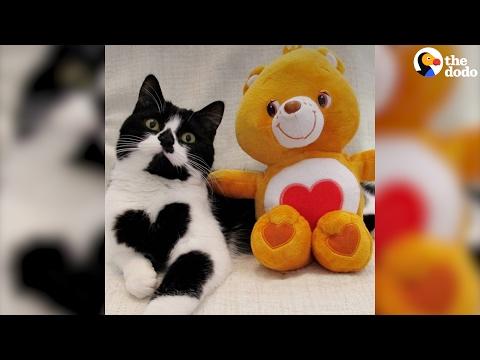 العرب اليوم - زوي قطة صغيرة ولدت بقلب مميّز على صدرها