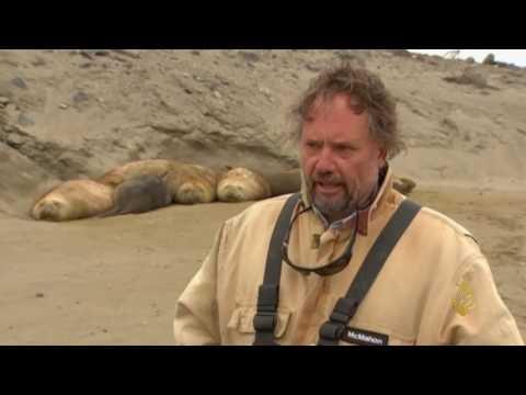 فلسطين اليوم - شاهد استعانة علماء الأحياء بحيوان فيل البحر