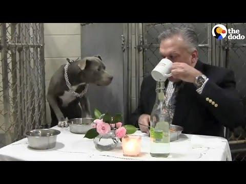 فلسطين اليوم - شاهد طبيب بيطري يتناول عشاءه مع كلبة في القفص وعلى الطاولة
