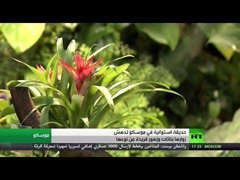 فلسطين اليوم - بالفيديو حديقة استوائية تستقطب أهالي موسكو