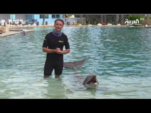 فلسطين اليوم - بالفيديو تجربة السباحة مع الدلافين في سي كواريوم ميامي