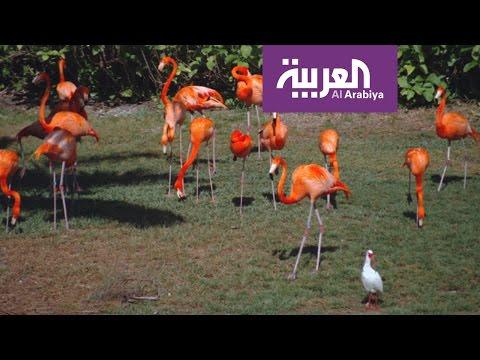 فلسطين اليوم - شاهد جزيرة الغابة موطن لأكثر من 120 صنفًا من الحيوانات