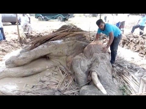فلسطين اليوم - الأهالي يحاولون إنقاذ فيل مصاب