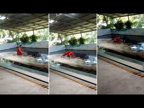 فلسطين اليوم - بالفيديو تمساح غادر يلتهم حارسه في جزيرة كوه ساموي السياحية جنوبي تايلاند