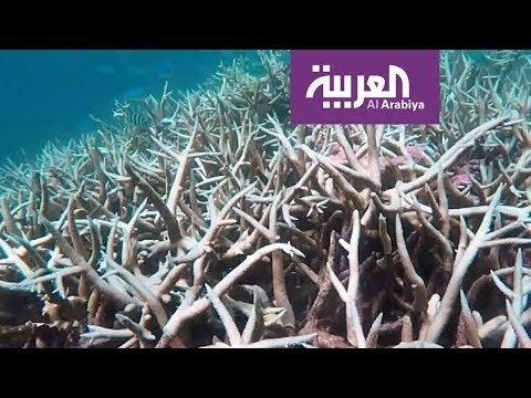 فلسطين اليوم - شاهد خبراء يقدرون قيمة الحاجز المرجاني في أستراليا بعشرات المليارات