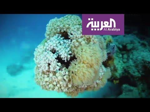 فلسطين اليوم - مشروع البحر الأحمر الأكثر بحثًا وتداولًا في السعودية