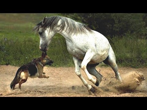فلسطين اليوم - أروع لحظات الصداقة بين الخيول والكلاب