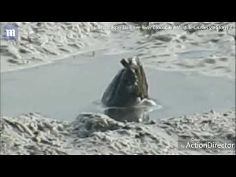 فلسطين اليوم - العثور على مخلوق غامض في بحيرة طينية