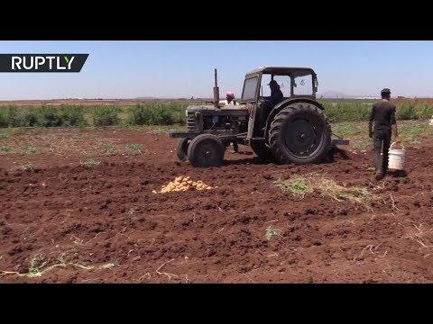 فلسطين اليوم - شاهد القطاع الزراعي يبدأ بالتعافي في درعا
