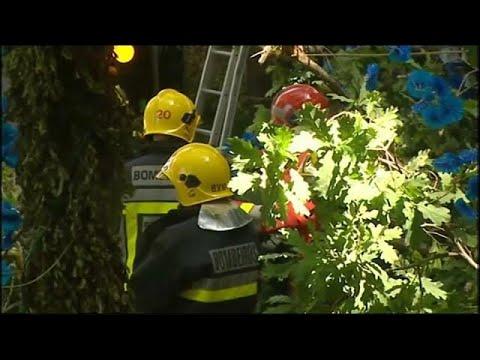 فلسطين اليوم - شاهد 11قتيلًا إثر سقوط شجرة في البرتغال