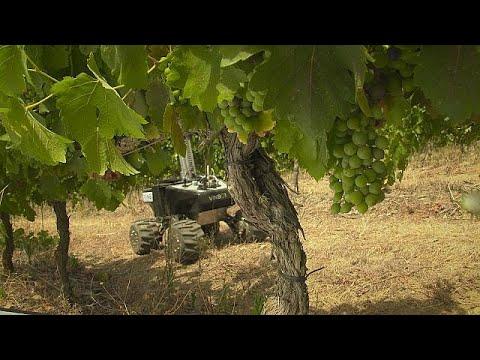فلسطين اليوم - شاهد فينبوت لزيادة القدرة التنافسية لمزراعي الكرمة ومصنعي النبيذ الأوروبيين