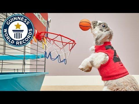فلسطين اليوم - شاهد أرنب يقفز لوضع الكرة داخل السلة