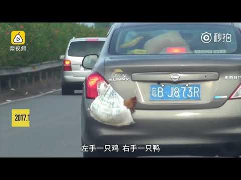 فلسطين اليوم - شاهد سائق ينقل بطة ودجاجة بطريقة غريبة