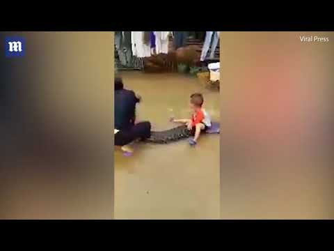 فلسطين اليوم - طفل يمتطي ثعبانًا ضخمًا كالحصان