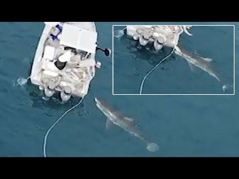 فلسطين اليوم - لحظة هجوم قرش أبيض ضخم على قارب صيد