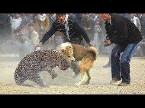 فلسطين اليوم - 10 معارك جنونية بين الحيوانات تحت شعار البقاء للأقوى