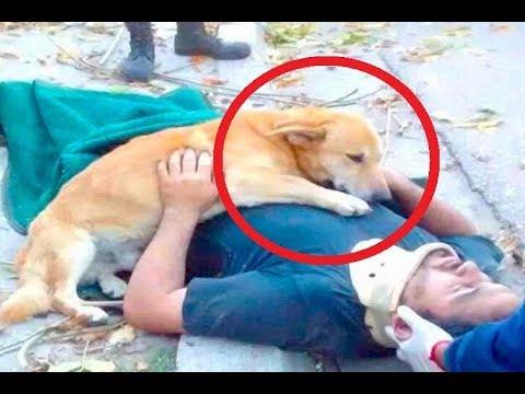 فلسطين اليوم - شاهد كلاب وفية لأصحابها حتى النهاية