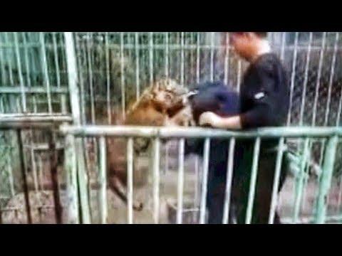فلسطين اليوم - شاهد نمر صغير يهرب من حديقة حيوان