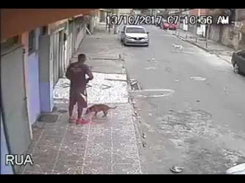 فلسطين اليوم - رد فعل رجل قضى كلب حاجته عليه