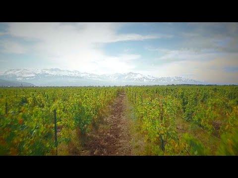 مصانع النبيذ على سفح جبال تيان شان في كازاخستان
