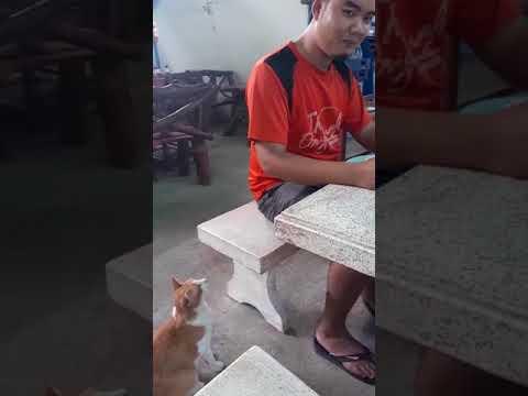 قطة تطلب الطعام بأدب تذيب قلوب الإنترنت