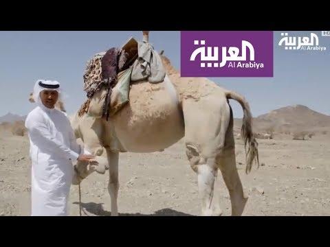 شاهد برنامج على خطى العرب يقدّم القصواء وأحفادها
