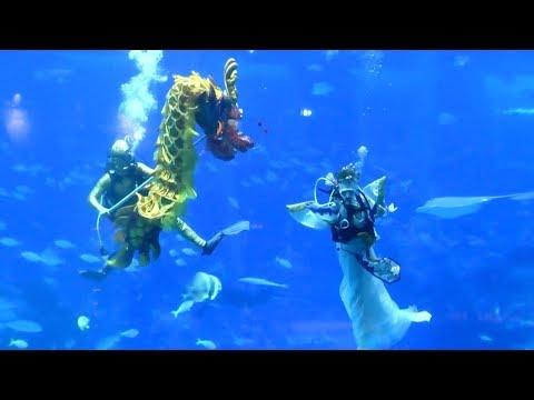 عرض راقص تحت الماء احتفالًا برأس السنة القمرية