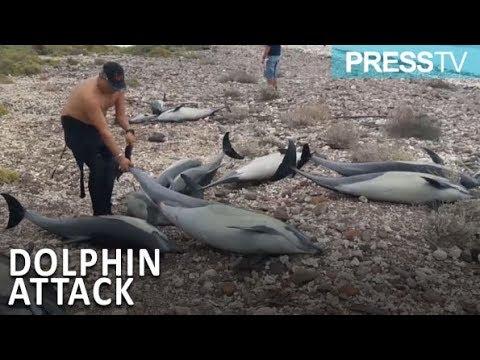 وفاة 21 دولفين بالقرب من شاطئ في شمال المكسيك