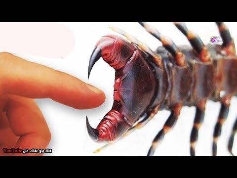 أكثر 10 عضّات إيلاماً في عالم الحشرات والحيوان