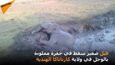 لحظة إنقاذ فيل غارق في الوحل في قرية ماديالي الهندية