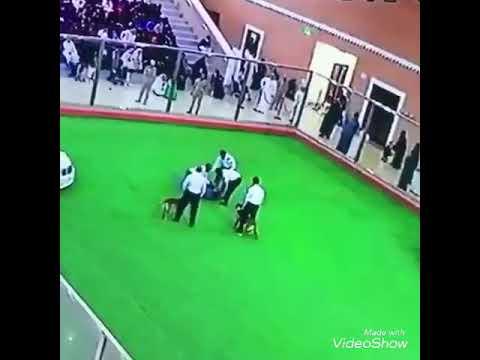 لحظة هجوم كلب على رجل في السعودية