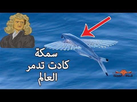 شاهد سمكة صغيرة كادت تغير مصير العالم