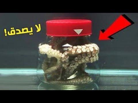 شاهد  تجربة حبس أخطبوط في وعاء مغلق