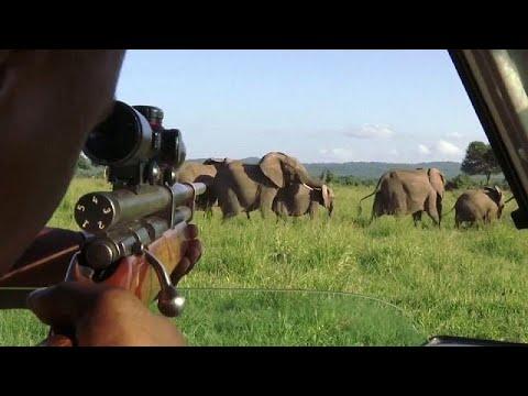 شاهد أطواق ذكية لتعقب الفيلة في تنزانيا