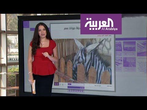 ضمن حلقة جديدة من برنامج صباح العربية