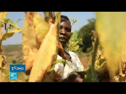 شاهد أمراض خطيرة يتعرض لها الأطفال في ملاوي بسبب زراعة التبغ