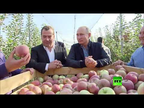بوتين يحضر حزمة من المنتجات الزراعية الروسية لإهدائها لنظيره المصري