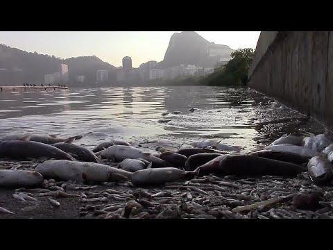 شاهد نفوق 13 طنًا من الأسماك في البرازيل بسبب ظاهرة إل نينيو المناخية